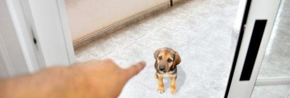 Descubre Como Adiestrar un Perro