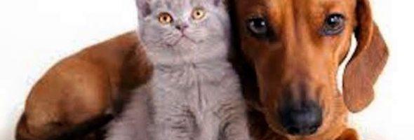 Beneficios Para la Salud de Tu Mascota