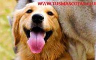 Consejos Para Tener Mascotas Felices