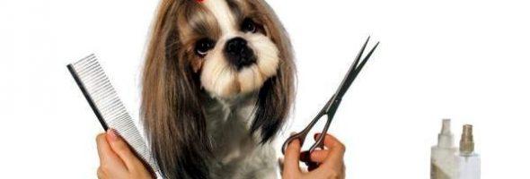 Cuidado del Pelo de mi Perro