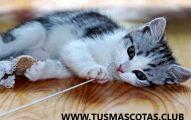 Manera de Criar un Gato