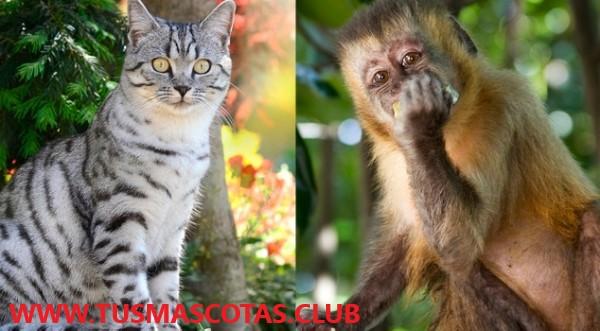Animales Silvestres o Mascotas Exóticas