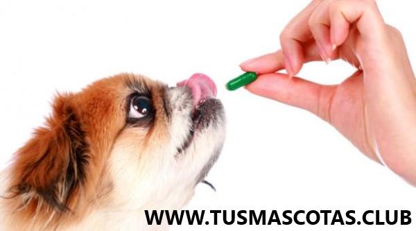 Lo Que Dicen Los Expertos Sobre la Salud de Sus Mascotas