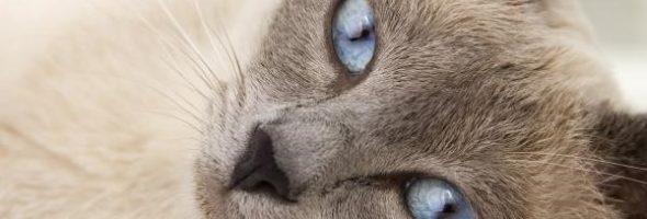 Los Mejores Gatos Recién Lanzados