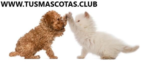 Mascotas Domésticas Nuevas Curiosidades
