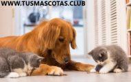 Noticias Sobre sus Mascotas