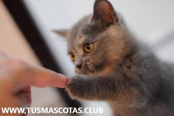 Nuevo Gato Como Adiestrarlo