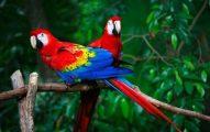 Secretos de Las Aves de Mascotas