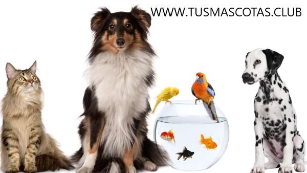 Consejos en La Salud de tu Mascota
