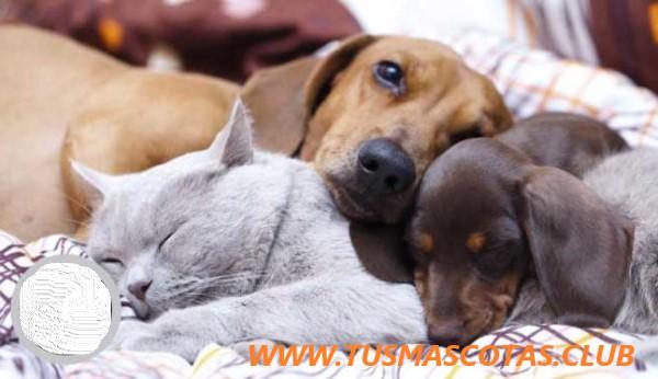 Mascotas Más Comunes del Mundo
