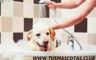 No Tienes Tiempo Para Bañar a tu Perro Limpiarlo