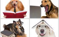 Cuáles son las Mascotas Más Inteligentes