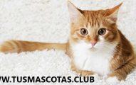lenguaje corporal de los gatos