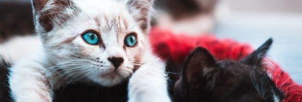 Cómo evitar que tus mascotas se envenenen con Cannabis