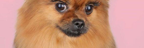 Maquilla a tus animales con pestañas postizas