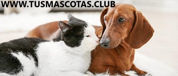 Presente su perro a sus gatos y otras mascotas