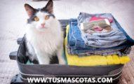 Qué hacer con tus mascotas cuando viajas