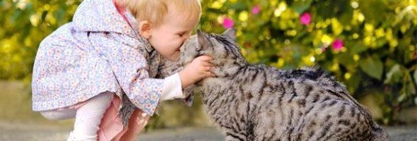 Explorando mascotas
