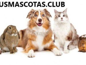 Mascotas Exóticas Cual es la Mejor