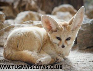 Las Mascotas Exoticas