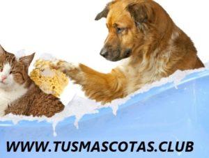 Mascotas Más Limpias