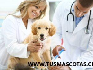 Cuidar de tu Mascota Puedes Progresar su Salud Física y Mental