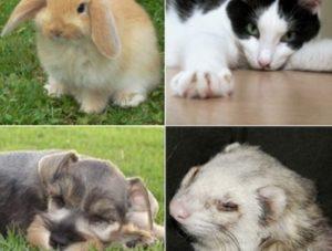 Mascotas Ideales Para Niños