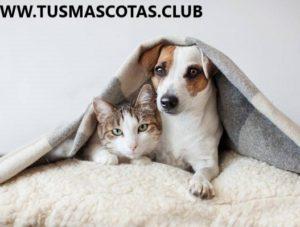 Seguro de salud para mascotas: restricciones importantes